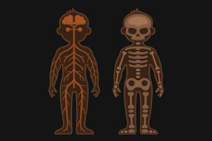 Human Body Anatomy Set
