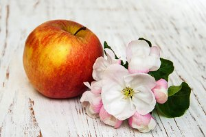 Apple and apple tree blossoms