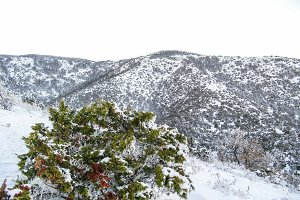 Snowy mountain with juniper in front