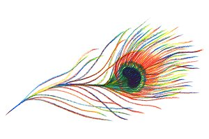 Rainbow peacock bird feather vector