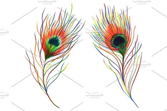 Rainbow Peacock Feather Vector Set