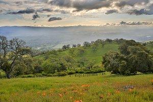 Santa Clara Valley in Spring