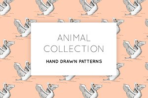 An Animal Collection
