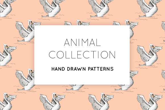 An Animal Collection