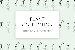 A Plant Collection