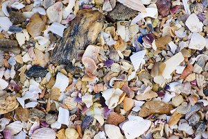 Pieces of shells, texture