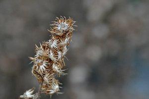 dry bush on winter