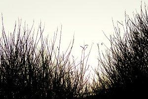 bush backlit