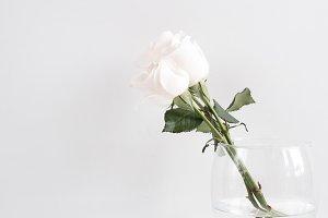 White Rose & Notebooks, Portrait