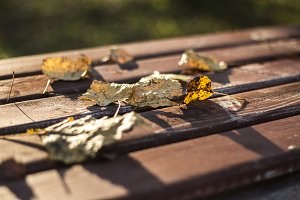 Dried leaves fallen 1