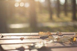 Dried leaves fallen 2
