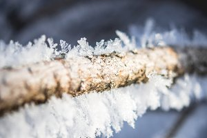 Frozen branch – Ice and wood