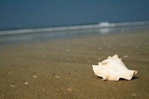 the sand of the beach