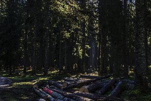 Sun in the Forest with Logs
