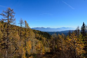 Forest, Mountains, Sky in Autumn