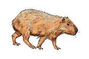 The vector of capybara