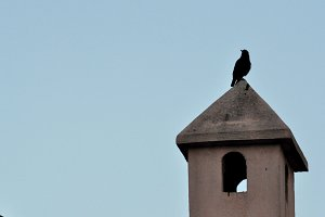 Blackbird on the top a chimney