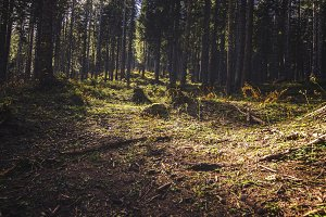 Light penetrating a dark Forest