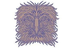 Great Philippine Eagle Head