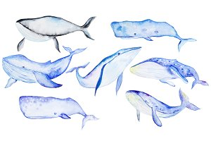 Whale watercolor set