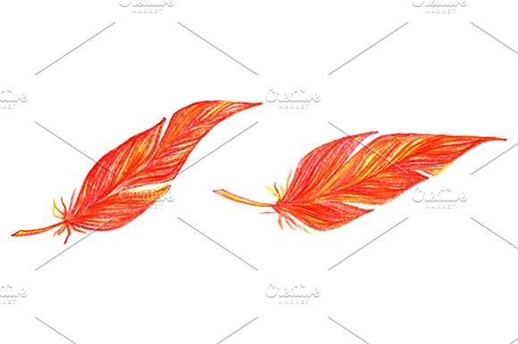 Colorful Bird Feather Set Vector