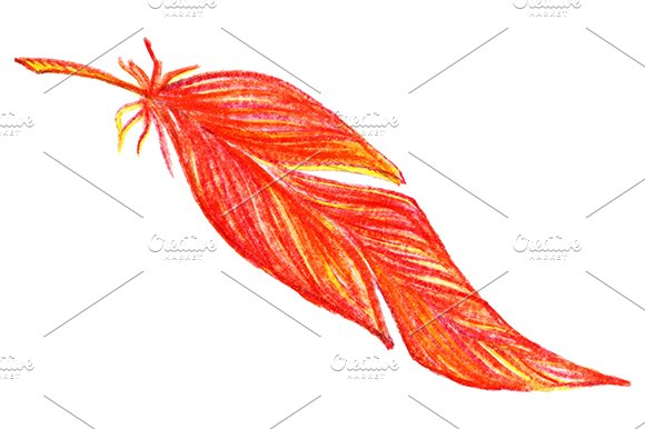 Colorful Bird Feather Isolate Vector
