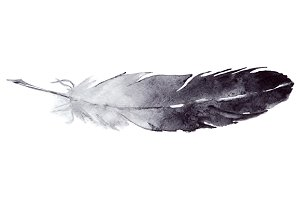 Watercolor monochrome feather vector