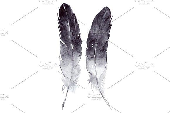 Watercolor Monochrome Feather Vector