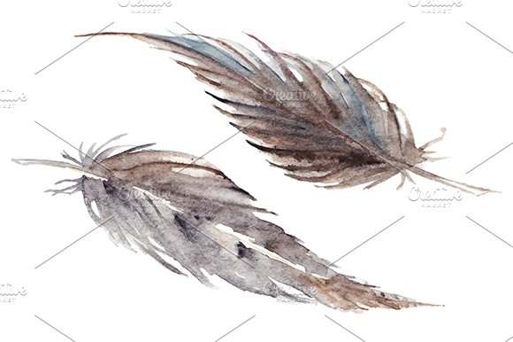 Watercolor Feather Isolated Vector