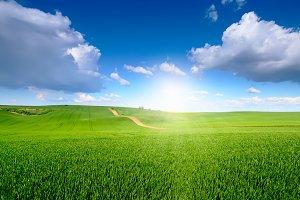 Blue sky above green blossom meadow