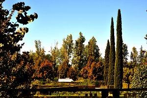 autumn garden with cypresses