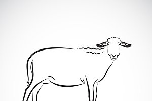 Vector of a sheep.