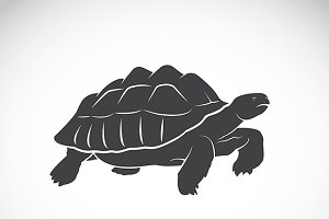 Vector of a turtle. Wild Animals.
