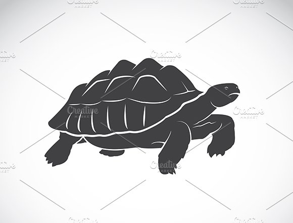 Vector Of A Turtle Wild Animals