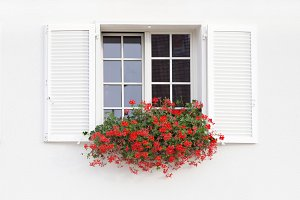 White window and flowers.