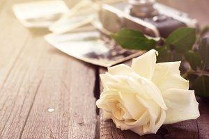 White rose, old photos
