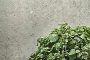 Green Plants Against Concrete Wall