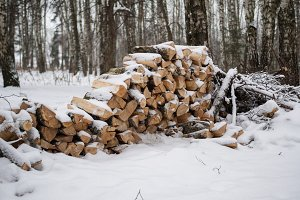 Stack Of Logs Covered With Snow In The Winter Forest