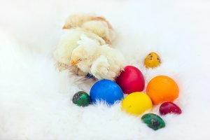 Baby chicken and ester eggs over white fur