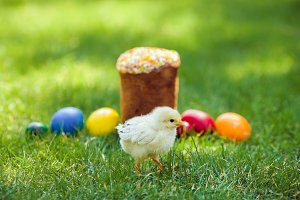 Chiken Fresh Easter cake with colorful decorative eggs