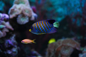 Ocean colored striped fish