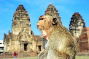 Monkey portrait