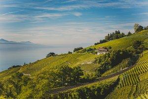 Beautiful Lavaux Vineyard Terraces