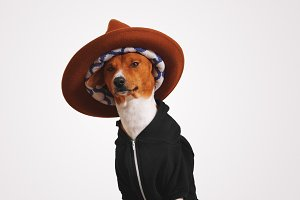 Cute dog in hoodie and fedora hat