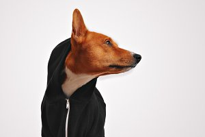 Portrait of a dog in black zippered hoodie