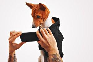 Basenji dog in hoodie with smartphone