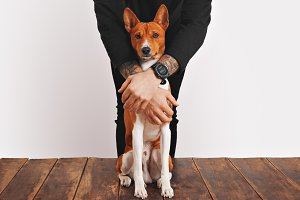 Basenji dog hugged by the owner