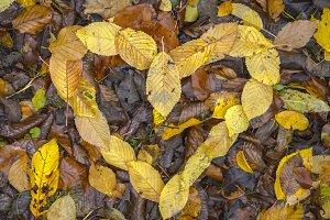 Fall -ing in Love