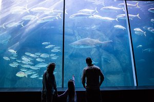Happy family looking at the fish tank
