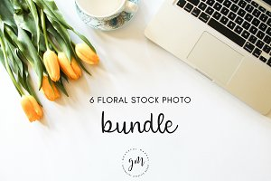 Yellow Tulips 6 Stock Images Bundle